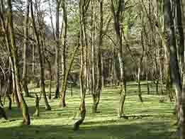 مطالعات پايه و تهيه طرح راهبردي پارك جنگلي گيلان ( باغ هنر و طبيعت لاكان)